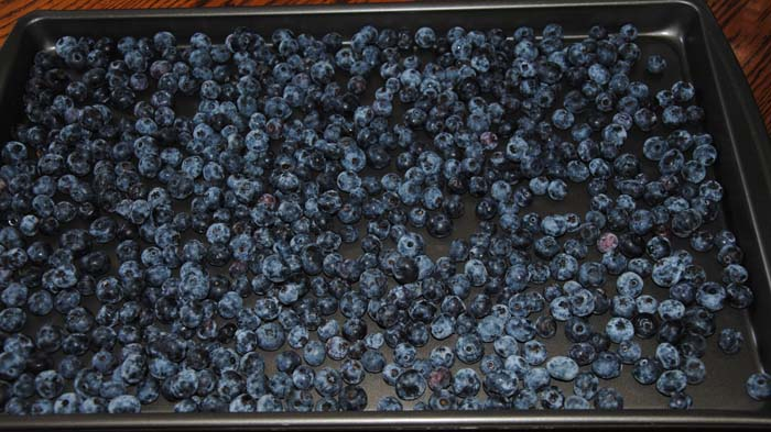 Frugal Value Lifestyle Freezing Blueberries